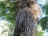 Farn-Baum